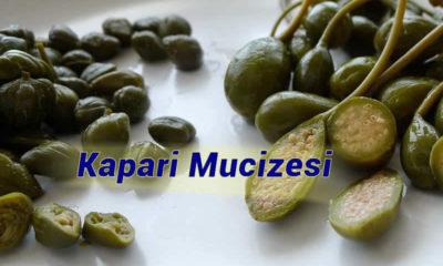 İspanya'yı zengin eden bitki Türkiye'de sökülüyor!