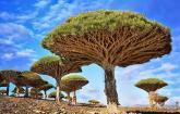 Muhteşem 10 Ağaç Resmi