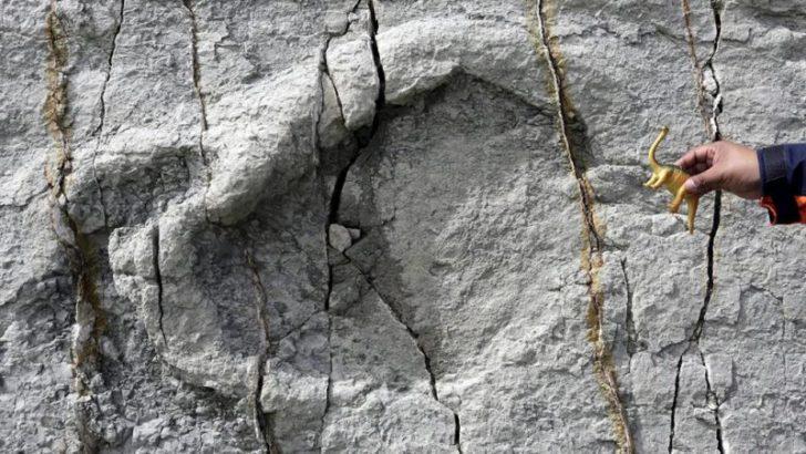 Titanozor'a ait ayak izi bulundu