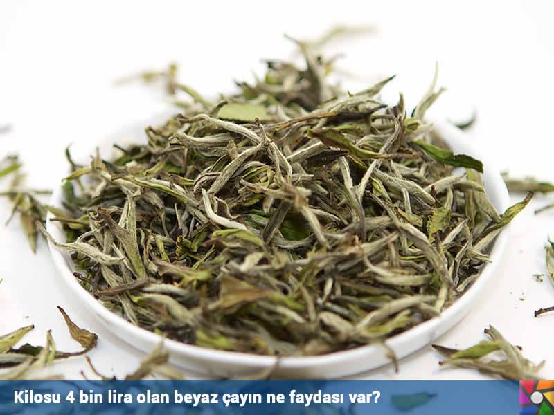 Kilosu 4 bin lira olan beyaz çayın ne faydası var?