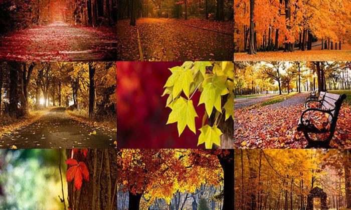 Sonbahar ve ağaçların müthiş beraberliğini anlatan 10 fotoğraf