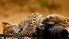 Uluslararası Bilim Fotoğrafları Yarışmasından ilginç 15 Fotoğraf
