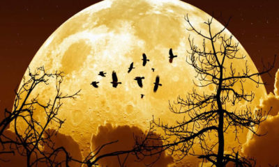 68 yıl sonra bir doğa harikası: Süper Ay