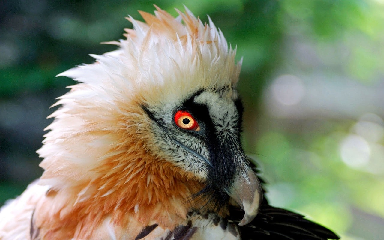 Akbaba kuşlarının bilinmeyen özellikleri | Kral Akbaba