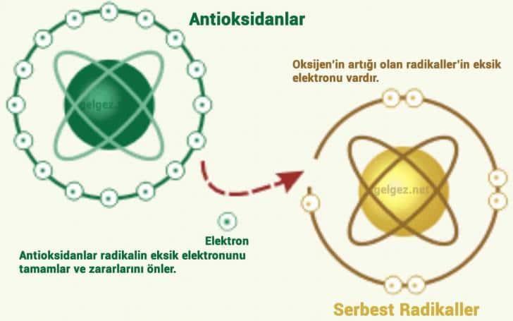 Antioksidan nedir? Antioksidanların yararları nelerdir? | Serbest Radikallerin eksik elektronlarını antioksidanlar tamamlar.