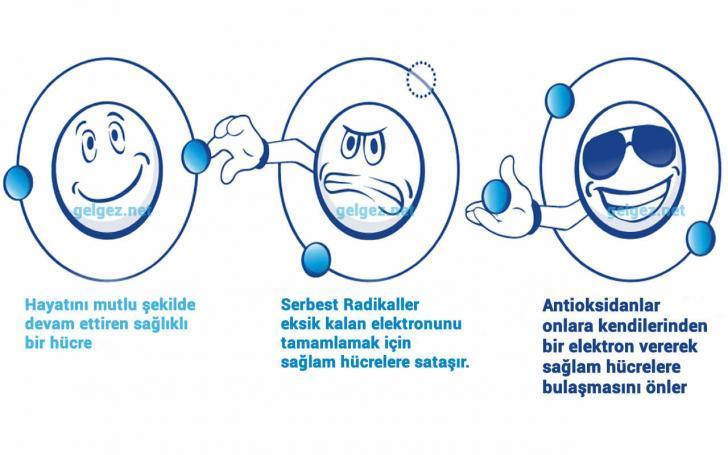 Antioksidan nedir? Antioksidanların yararları nelerdir? | Serbest Radikallerin sağlam hücreye bulaşmasını Antioksidanlar önler.