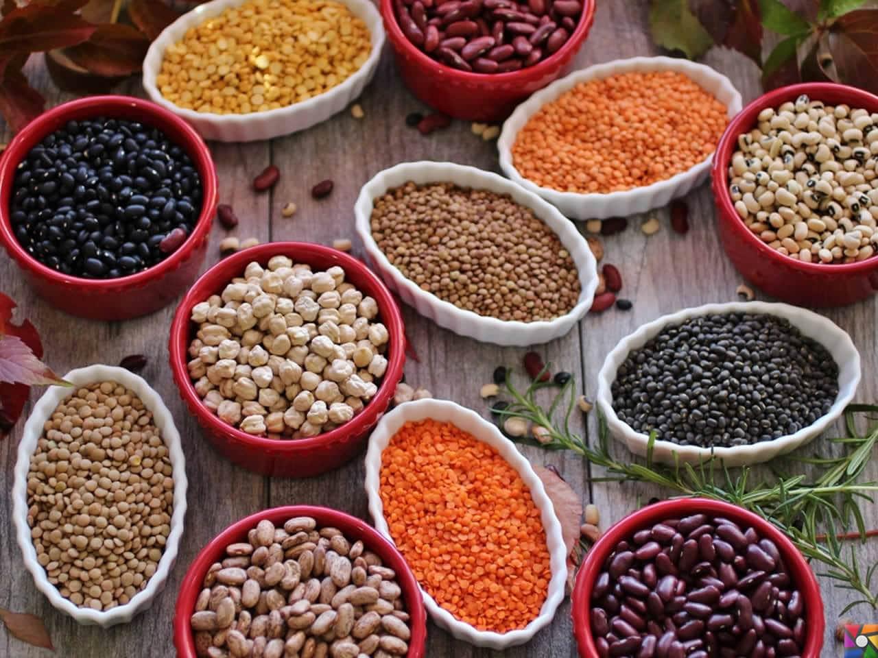 Besin Grupları Nelerdir? Besinlere göre nasıl dengeli beslenmeliyiz? | Bitkisel protein kaynakları: Kurubaklagiller