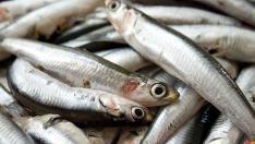 Hamsiyi kılçığıyla yemenin ne yararı vardır?