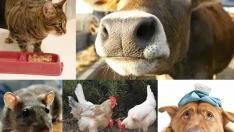 Hayvanlardan insanlara geçen hastalıklar nelerdir? Belirtileri ve Tedavisi
