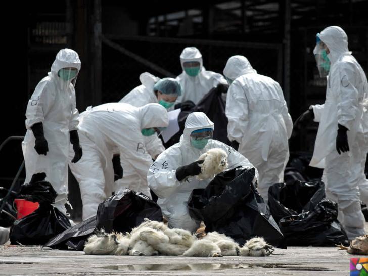 Hayvanlardan insanlara geçen hastalıklar nelerdir? Belirtileri ve Tedavisi | Kuş gribi tüm dünyayı tehdit ediyor