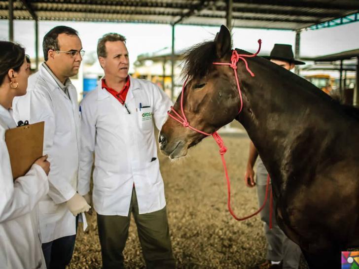 Hayvanlardan insanlara geçen hastalıklar nelerdir? Belirtileri ve Tedavisi | Çiftlik Hayvanlarını veterinerlerin kontrolü sağlanmalı