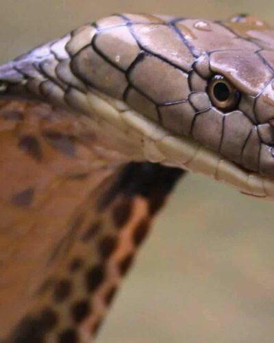 Dünyanın en zehirli hayvanı yılanlar mı?