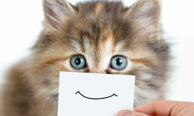 Kediler insanların duygularını nasıl hissediyor?