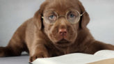 Köpekler mi daha akıllı kediler mi?