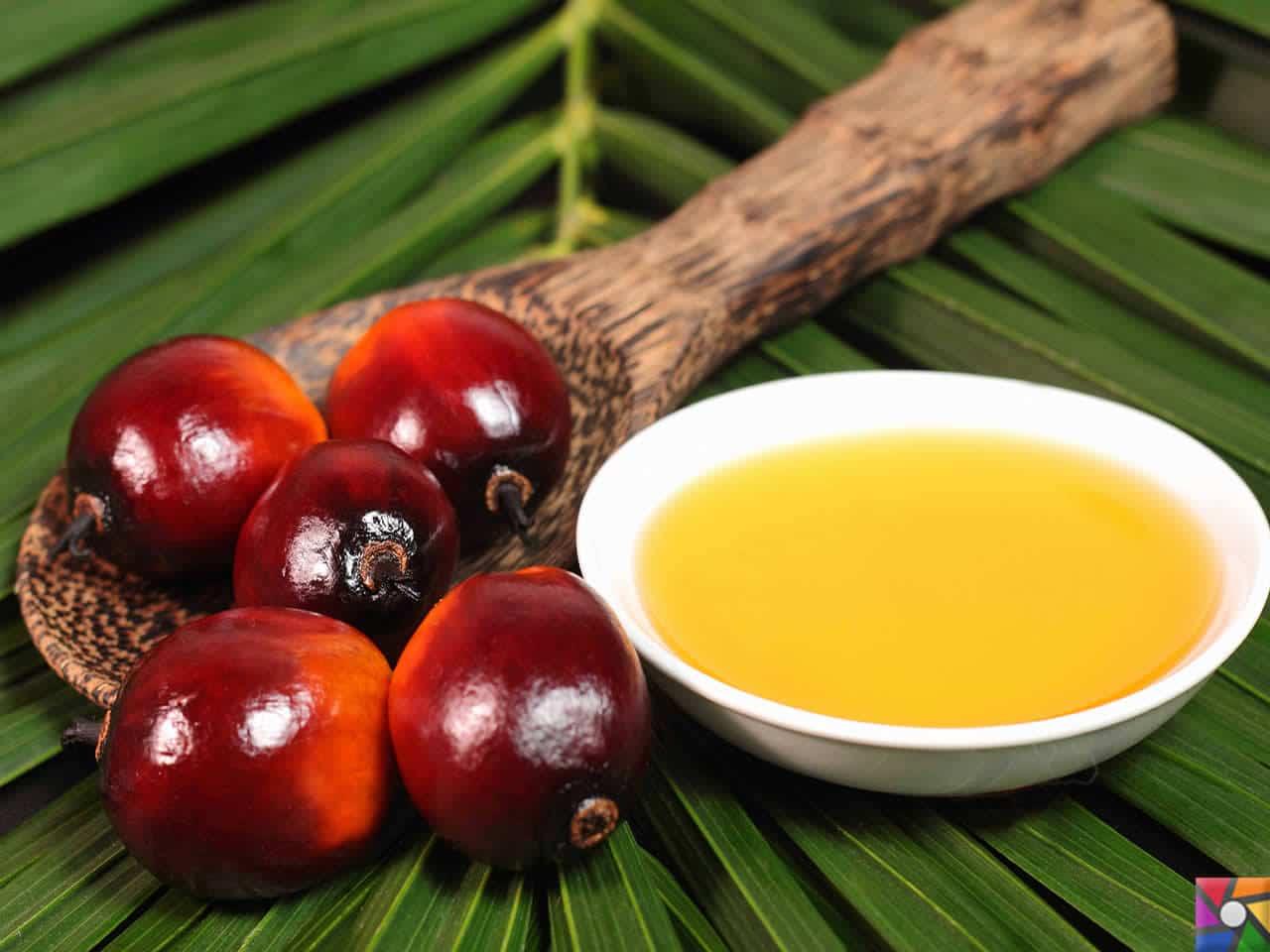 Palm Yağı Zararlı mı