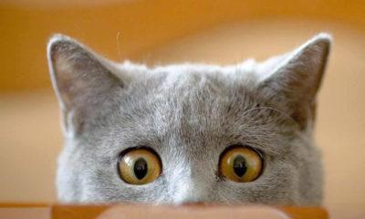 Kediler hakkında hiç bilmediğiniz ilginç özellikler
