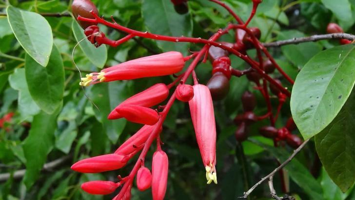 Acıağaç Bitkisinin özellikleri nelerdir? Faydaları, Zararları Nelerdir?