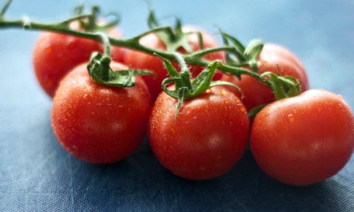 Bilim neden idrardan domates yetiştirmeye çalışıyor?