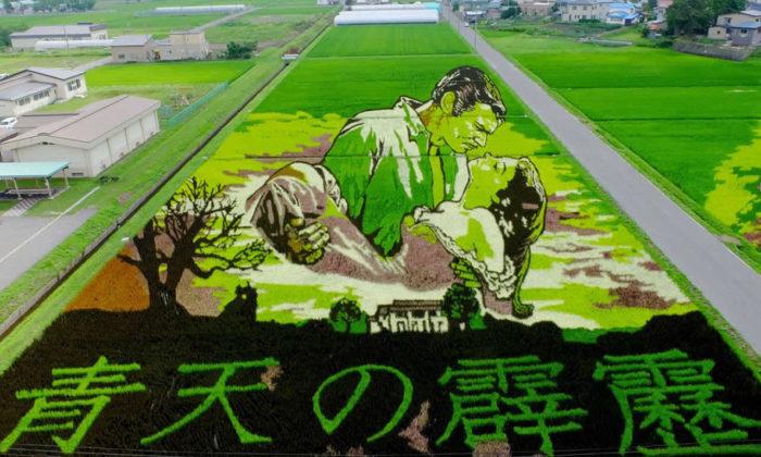 Japonlar'ın pirinç tarlalarına yaptıkları resim sanatı: Tanbo