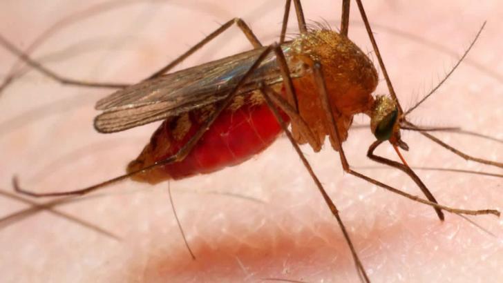 Sıtma Nedir? Nasıl bulaşır? Belirtileri nelerdir? Korunma ve Tedavisi