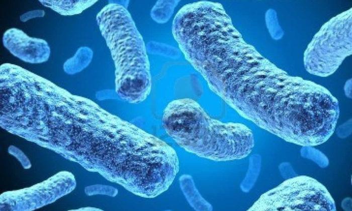 Vücuda yararlı mikropları tanıyor musunuz? Yararlı bakteriler nelerdir?