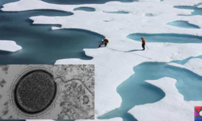 Buzullar eridikçe donmuş virüsler tekrar canlanmaya başlıyor!