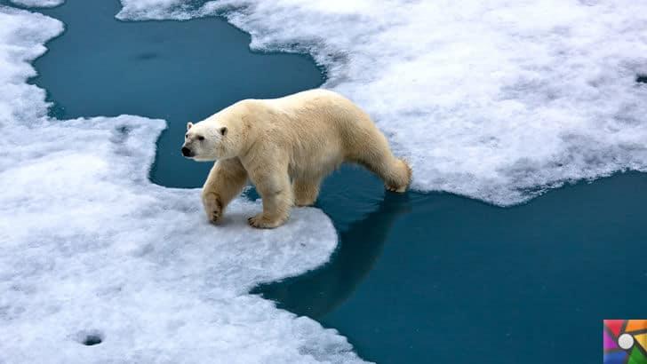 Buzullar eridikçe donmuş virüsler tekrar canlanmaya başlıyor! | Küresel Isınma özellikle Kutup Ayılarını etkiliyor