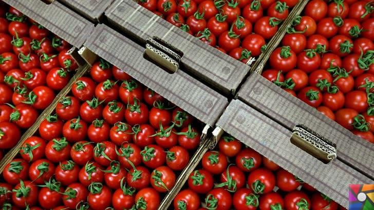 Domates neden pahalı? Domates fiyatları Türkiye'de neden yüksek? |  Yurt dışına paketlenen domatesler