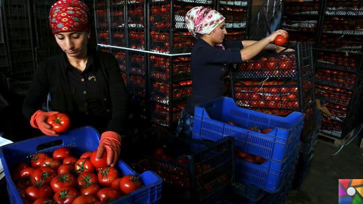 Domates neden pahalı? Domates fiyatları Türkiye'de neden yüksek? | Domates üretiyoruz ama son yıllarda Rusya ve Irak ile kriz sebebi