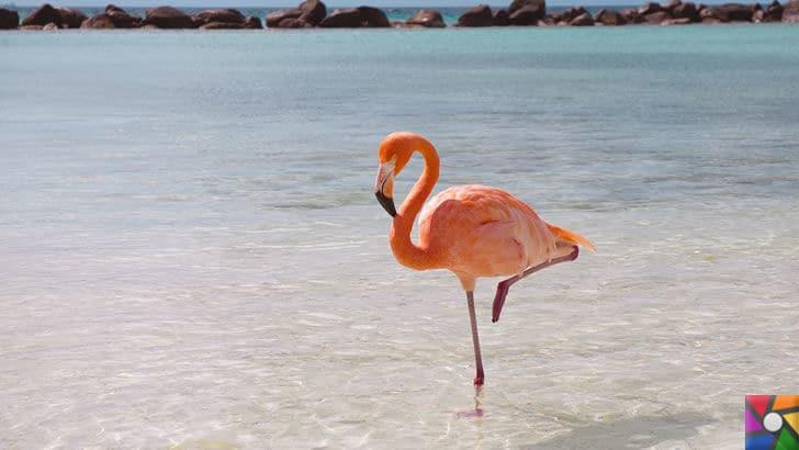 Flamingoların özellikleri nelerdir? Tek ayak üzerinde neden duruyorlar? | Kestiren bir Flamingo