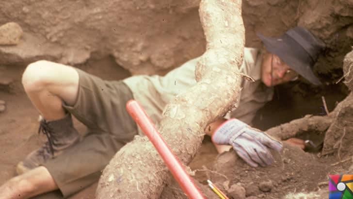 Arkeolog Nedir? Arkeolog Nasıl Olunur? | Arkeologlar kazılarda zor şartlar altında çalışabilir