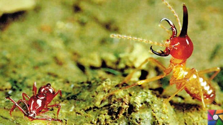 Dünyanın en hızlı dövüş tekniklerine sahip hayvanlar | Tuzak çeneli karıncalar