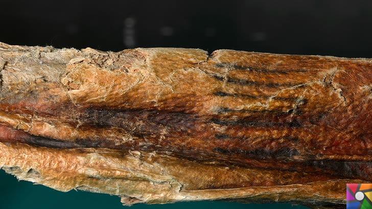 Dünyanın ilk faili meçhul cinayeti 5300 yıl önce işlenmiş! | Ötzi'nin dövmeleri