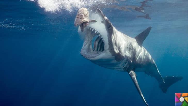 Dünyanın en tehlikeli ve öldürücü hayvanları hangileridir? |Beyaz Köpekbalığı