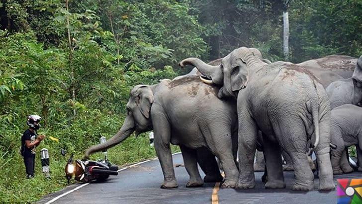Dünyanın en tehlikeli ve öldürücü hayvanları hangileridir? |Filleri kızdıran bir motorcu
