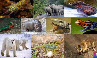 Dünyanın en tehlikeli ve öldürücü hayvanları hangileridir?