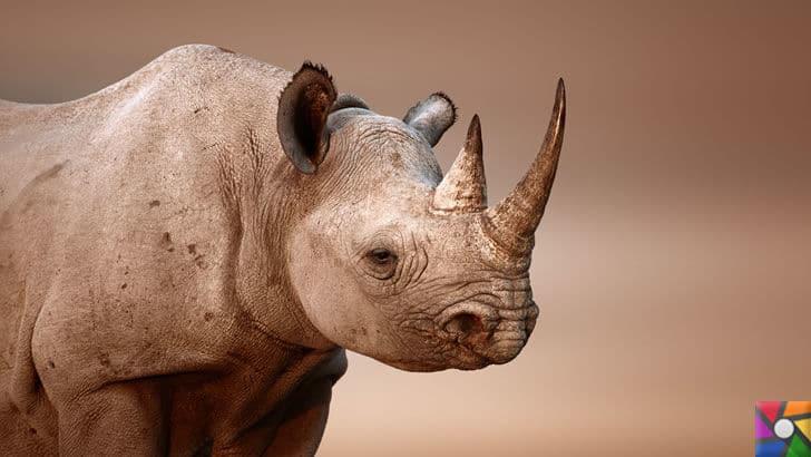 Dünyanın en tehlikeli ve öldürücü hayvanları hangileridir? |Gergedan
