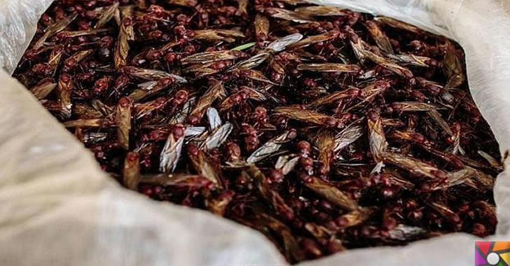 Meksika mutfağındaki lüks karınca ezmesi: Çikatana Sosu   Nasıl yeniyor?