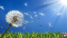 Alerjiler nasıl meydana gelir? Bağışıklık sistemi alerjilerden nasıl korur?