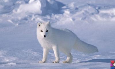 Dünyanın en tüylü hayvanları hangileridir? En tüylü 4 hayvan