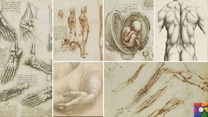 Leonardo da Vinci Kimdir? Hayatı, Biyografisi ve Teknik İcatları | Tıp alanında çizilmiş resimleri