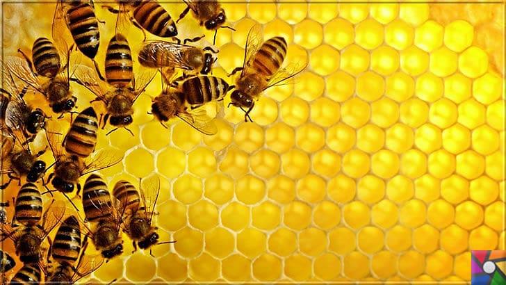 Balın Şifalı olması için nasıl saklanmalı ve tüketilmeli? Balın harika faydaları | Albert Einstein'a göre Arıların neslinin tükenmesi, dünyanın yok olmasının nedeni olacak