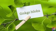 Ginkgo Biloba Nedir? Ginkgo Biloba'nın Faydaları ve Zararları nelerdir?