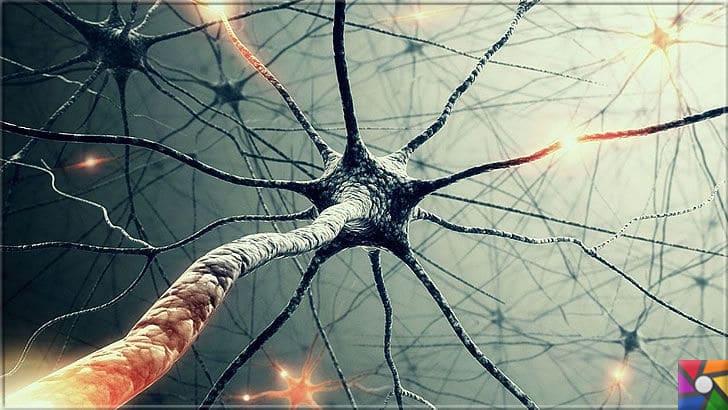 İnsan hafızasının sınırı var mı? Hafıza (Bellek) kapasitesi nasıl artar? | İnsan beyninde 100 milyar nöron yani sinir hücresi vardır. Ağ şeklinde oldukları için çok az yer kaplarlar
