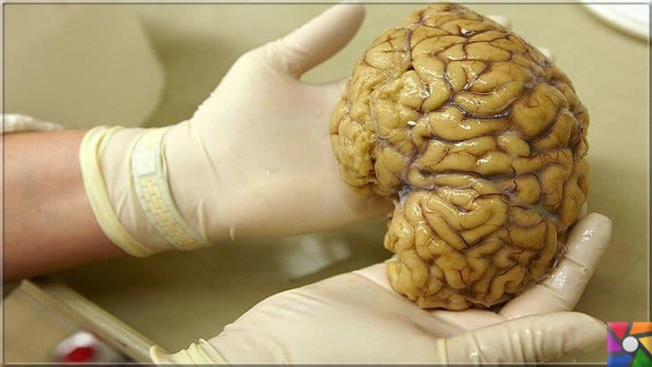 İnsan hafızasının sınırı var mı? Hafıza (Bellek) kapasitesi nasıl artar? | Beyin hala bilim insanlarının sırlarını çözemediği ilkel ama bir öylesine çok ilginç harika bir organdır