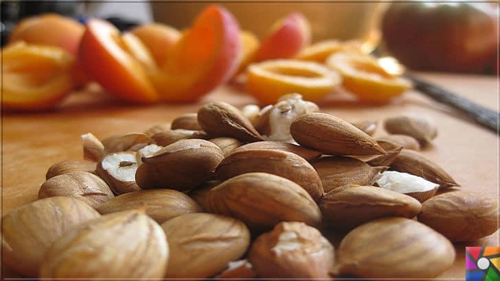 Kayısının Meyvesi, Çekirdeği, Yağının faydaları ve zararları nelerdir? | Kayısı Meyvesinin çekirdeği tıbbi B17 Vitamini kaynağıdır