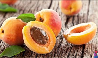 Kayısının Meyvesi, Çekirdeği, Yağının faydaları ve zararları nelerdir?
