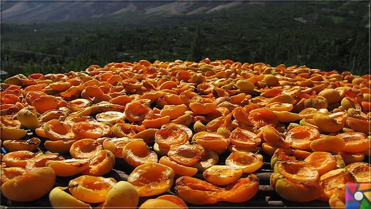 Kayısının Meyvesi, Çekirdeği, Yağının faydaları ve zararları nelerdir? | Kayısı Meyvesinin doğal yollarla kurutulmuş olanlarını tercih edin