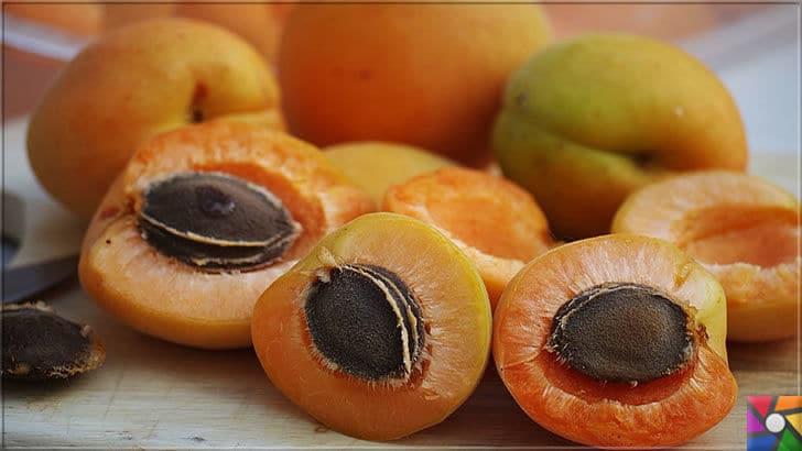 Kayısının Meyvesi, Çekirdeği, Yağının faydaları ve zararları nelerdir? | Kayısı Meyvesi ve çekirdeği ile şifalı bir bitkidir