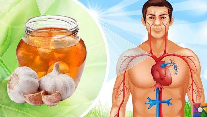 Mucizevi Bitki Sarımsak hakkında bilimsel çalışmalar ve faydaları nelerdir? | Kalp ve Damar sağlığı için her gün 2 diş sarımsak